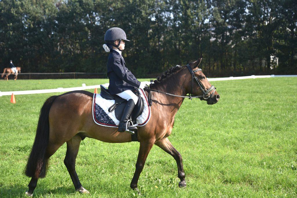 Pieter Stuyvesant concours pony's